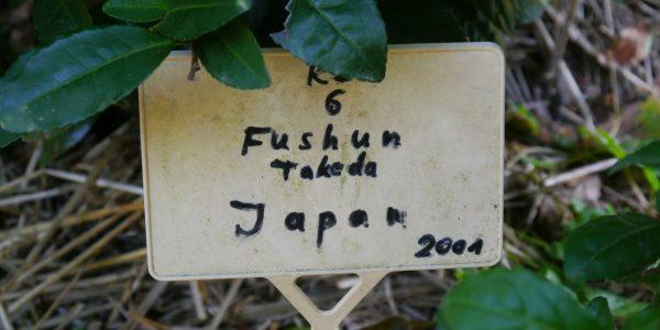 Fushun